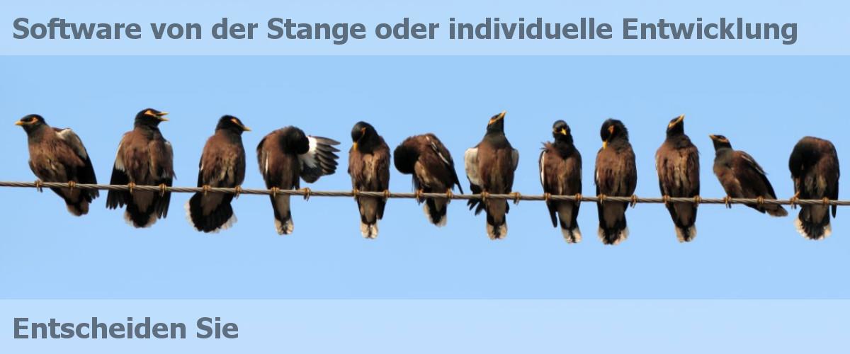 BitBumper Banner: Software von der Stange oder individuelle Entwicklung (Vögel auf Leitung)